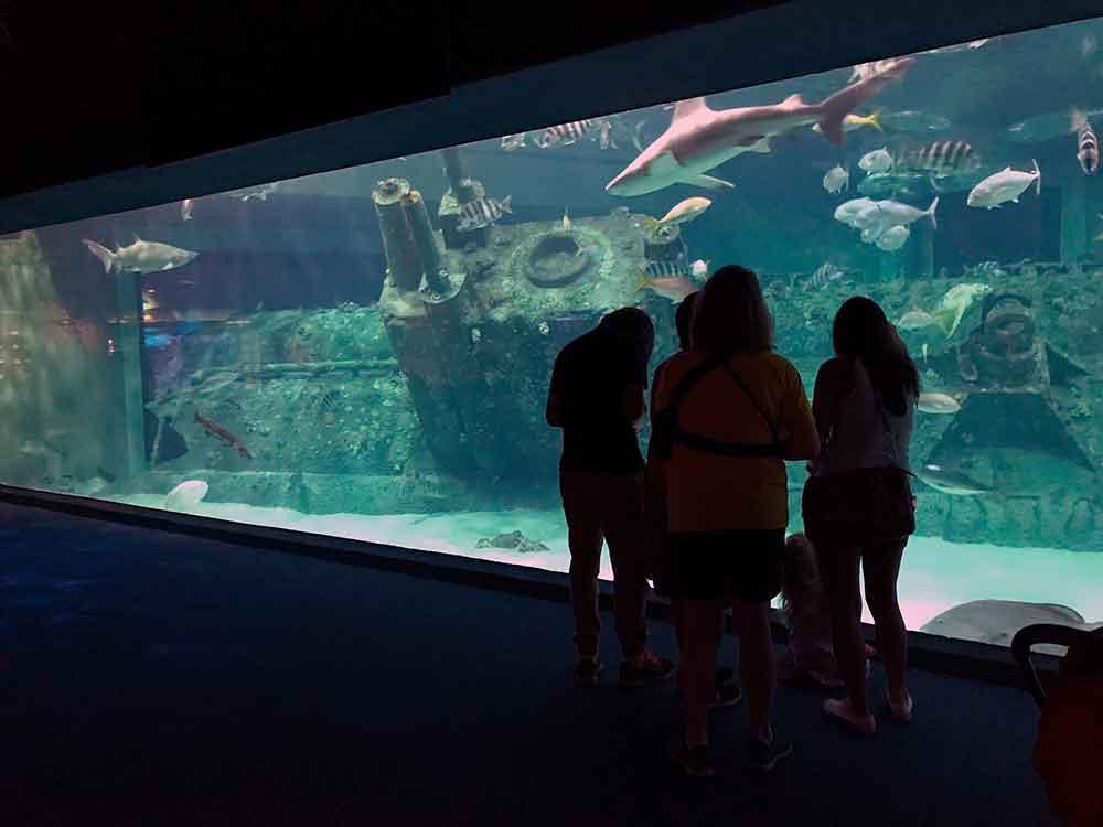 Indoor Oceans: North Carolina Aquarium at Pine Knoll ...